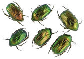 Emerald gold bugs set — Stock Photo