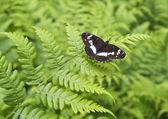 The butterfly on fern sheet — Stock Photo