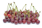 Berries of a cherry with shanks — Stock Photo