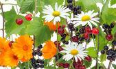 çilek ve çiçek mix — Stok fotoğraf