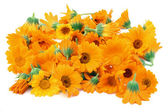 Calendula flowers isolated — Stock Photo