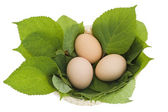 Easter eggs in a nest from leaves — Stockfoto
