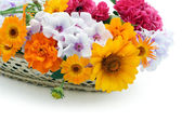 Flowers in a basket postcard — Stock Photo