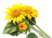 Trzy słoneczniki na stół biały — Zdjęcie stockowe