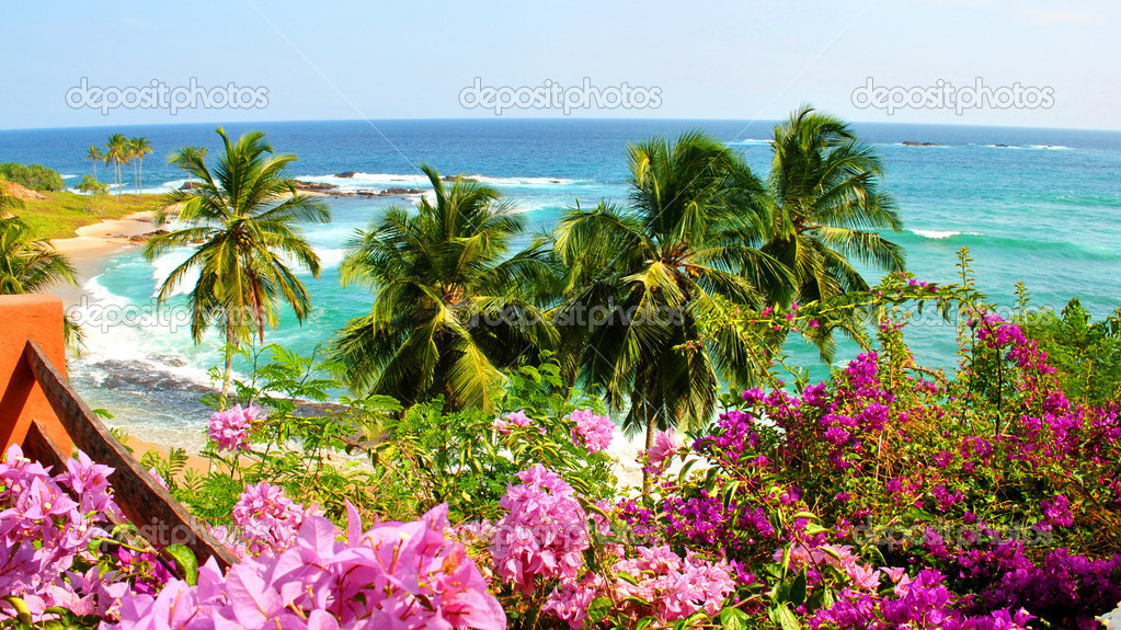 Tropical ocean view, blue sky and macrotherms  Stock Photo #2946677