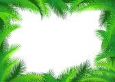 Palm leaf frame — Stock Vector