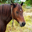 Portrait of horse — Stock Photo #2793111