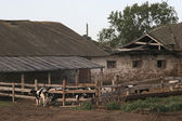 Aging farm — Stock Photo