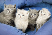 Four kitten — Stock Photo