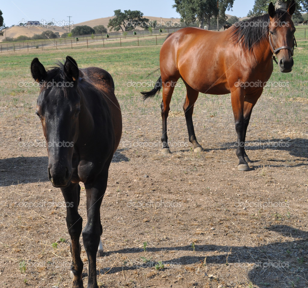 Мама лошадь ребенок лошадь
