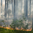 Fire in the forest — Stock Photo #2700369