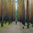 Woman is cycling in pine forest — Photo