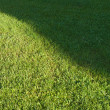 Cut lawn — Stock Photo #2732198