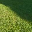 couper la pelouse — Photo