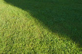 Cut lawn — Stock Photo
