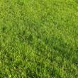 Stock Photo: Cut lawn