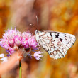 White butterfly — Stock Photo #2782464