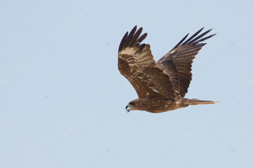 Eagle is flying in the sky — Stock Photo #2782101
