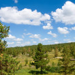 Pine tree forest landscape — Stock Photo #2815441
