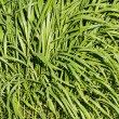 Blade grass leaves — Stockfoto