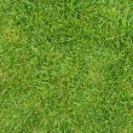 Green grass field — Stock Photo #2816033