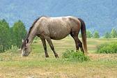 Cavalo marrom — Foto Stock