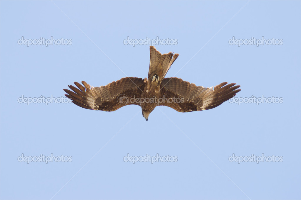 Eagle is flying in the sky  Stock Photo #2815714