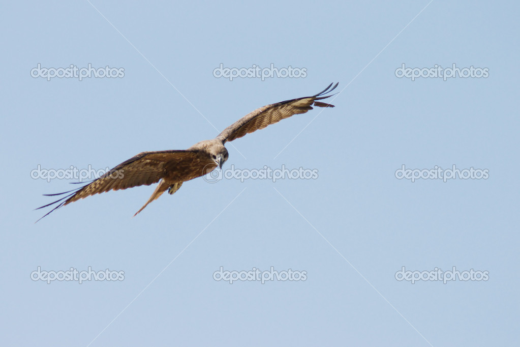Eagle is flying in the sky  Stock Photo #2815720