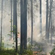 Fire in the forest — Stock Photo