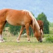 Stock Photo: Brown horse