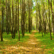 Royalty-Free Stock Photo: Path in forest