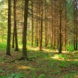 Stock Photo: Sunlight rays in forest