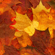 Maple leaf background — Stock Photo #2854974