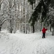 Stock Photo: Womski in winter forest
