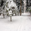 Foto Stock: Ski-run in winter forest