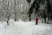 Woman ski in winter forest — Stock Photo