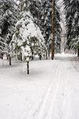 Kayak tarafından işletilen kış orman — Stok fotoğraf