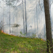 Fire in the forest — Stock Photo #3184923