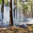 Fire in the forest — Stock Photo #3184948