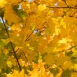 Gold autumn - Stock Photo