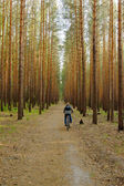 Woman is cycling in pine forest — Stock Photo