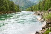 River and forest — Zdjęcie stockowe