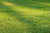 Grass field with sunlight spots — Stock Photo
