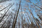 Trees crown — Stock Photo