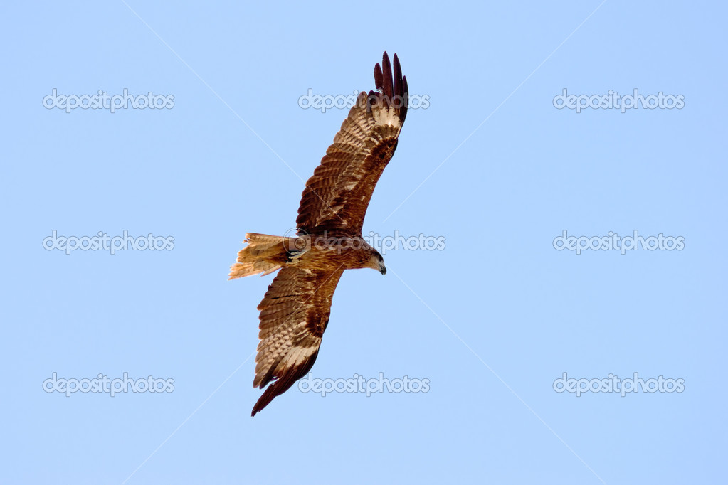 Eagle is flying in the sky — Stock Photo #3188212