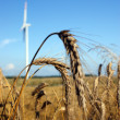Wheat and wind turbine in background — Stock Photo #2995229
