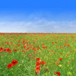 Poppy meadow — Stock Photo #3138125
