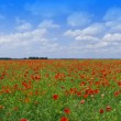 Poppy field — Stock Photo #3138189