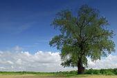 árvore e belo céu azul — Foto Stock