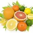 Citrus — Stock Photo #3784870